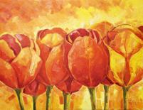 Tulipány v řadě